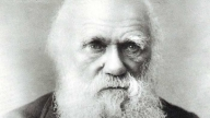 Disney progetta un film su Charles Darwin