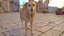 Film sulla storia del cane di Scicli, Italo
