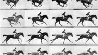 The horse in motion di Muybridge