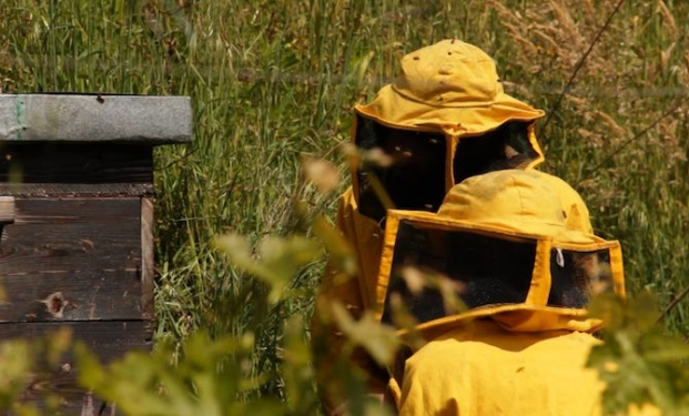 Il tempo delle api